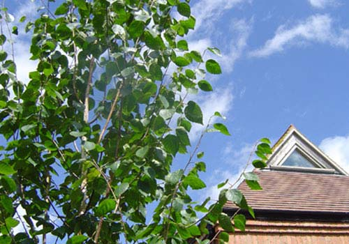 View of office gable and tree in our grounds